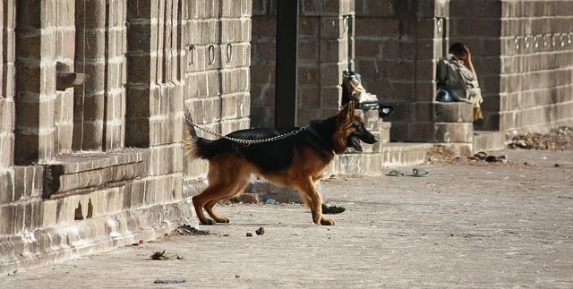 Uvázaný pes